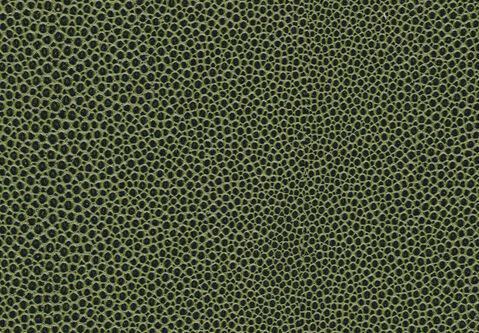 skai Soshagro EN  green-black