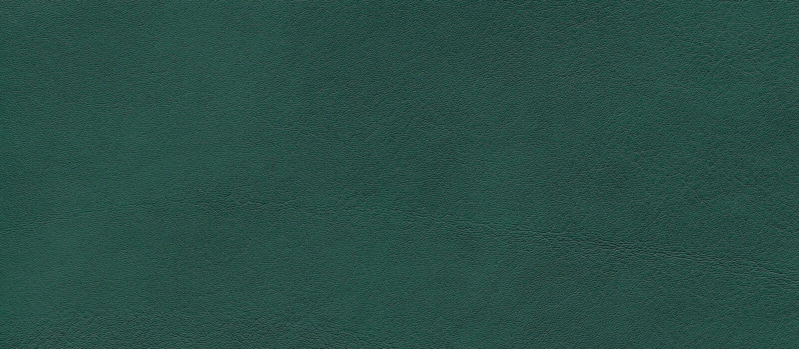 skai Palma  tundra